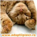Adopta o pisica draguta