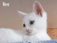 GATTI Neve, 3 mesi gattino dolcissimo aspetta una famiglia