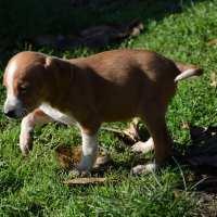 METICCIO Aria cucciola in adozione