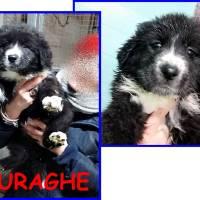 METICCIO NURAGHE 3-4mesi cucciola meravigliosa