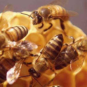 Miele nettare degli dei