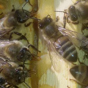 La stagione apistica 2020 è finita