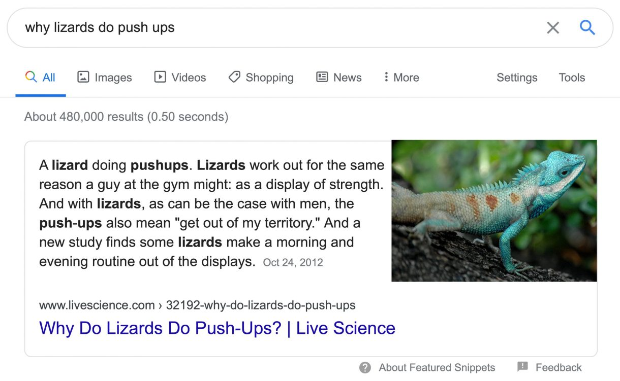 Paragraph Snippet Of Why Lizards Do Pushups