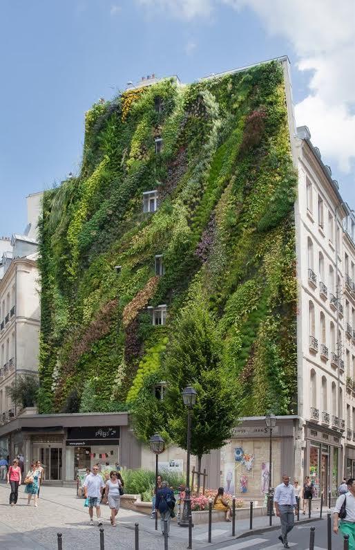 Le mur végétal créé par Patrick Blanc rue d'Aboukir dans le 2ème arrondissement.