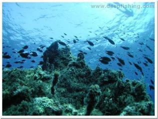 diving8