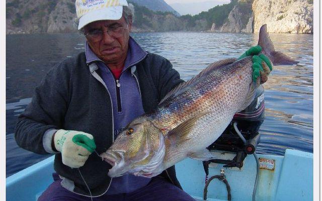 Balık Avı Hikayeleri - Sinarit Avı