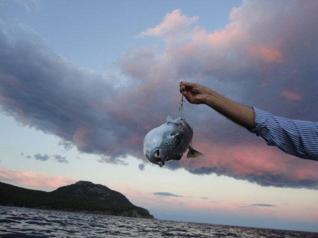 Balon Balığı Sonu Nasıl Çözülür