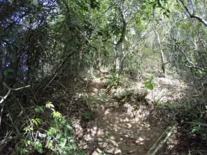 Trilha da Pedra Bonita - trecho do Escorrega - Atalho