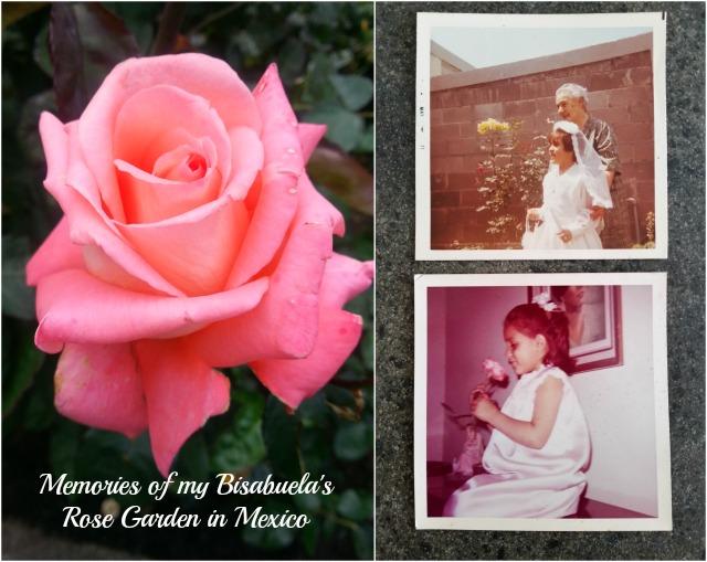 Memories of my bisabuelas rose garden in Mexico #MiJardinalidad #ad