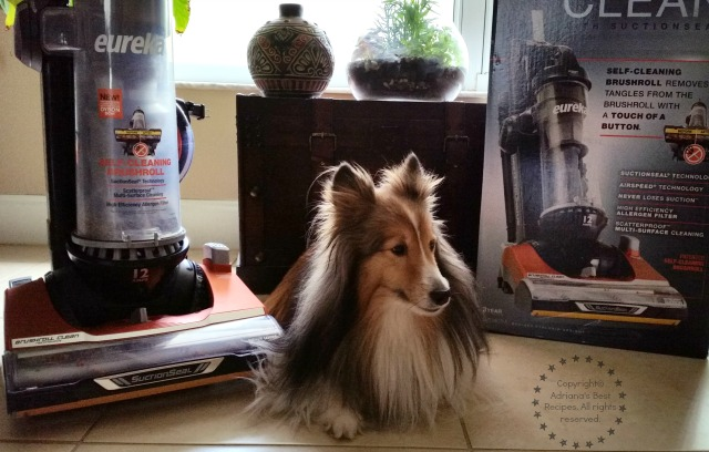 Bella our Sheltie one of our hairy babies #CleaningUntangled #ad