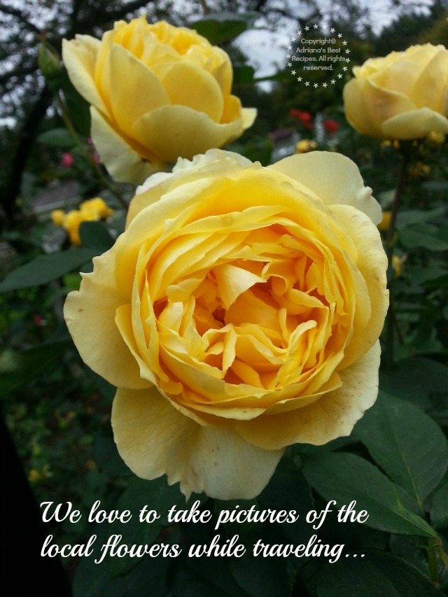 We love to take pictures of the local flowers while traveling #MobileMemories #ad