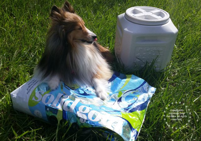 Solid Gold invited my Bella to be part of the Free Spirit Challenge #SolidGoldPets #ad