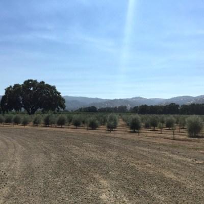Visitando Capay Valley Ranch