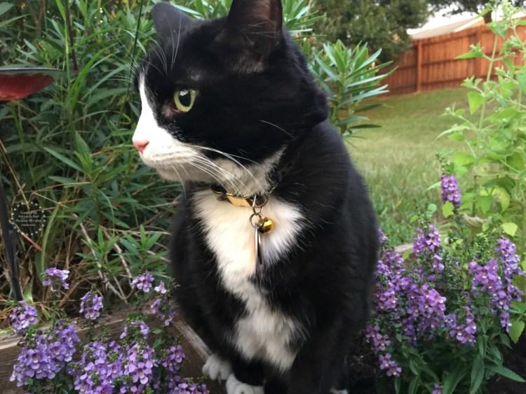 Tatiana aprobando el nuevo jardin para gatos