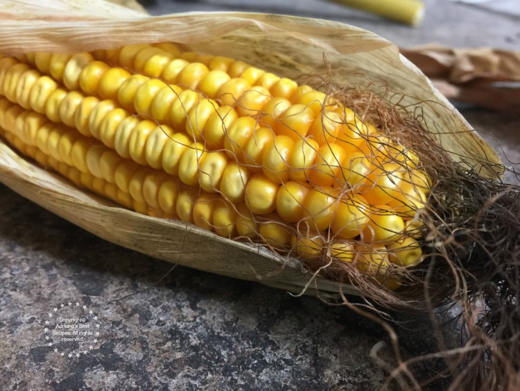 Corn intended for cattle feed