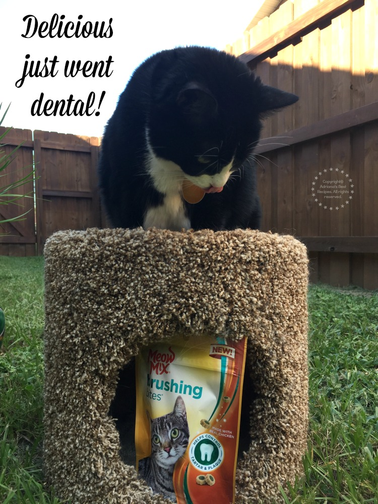 New Meow Mix Brushing Bites, because delicious just went dental