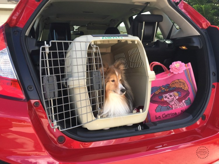 If you are taking a long ride or a road trip it is recommended to use a crate to transport your dog