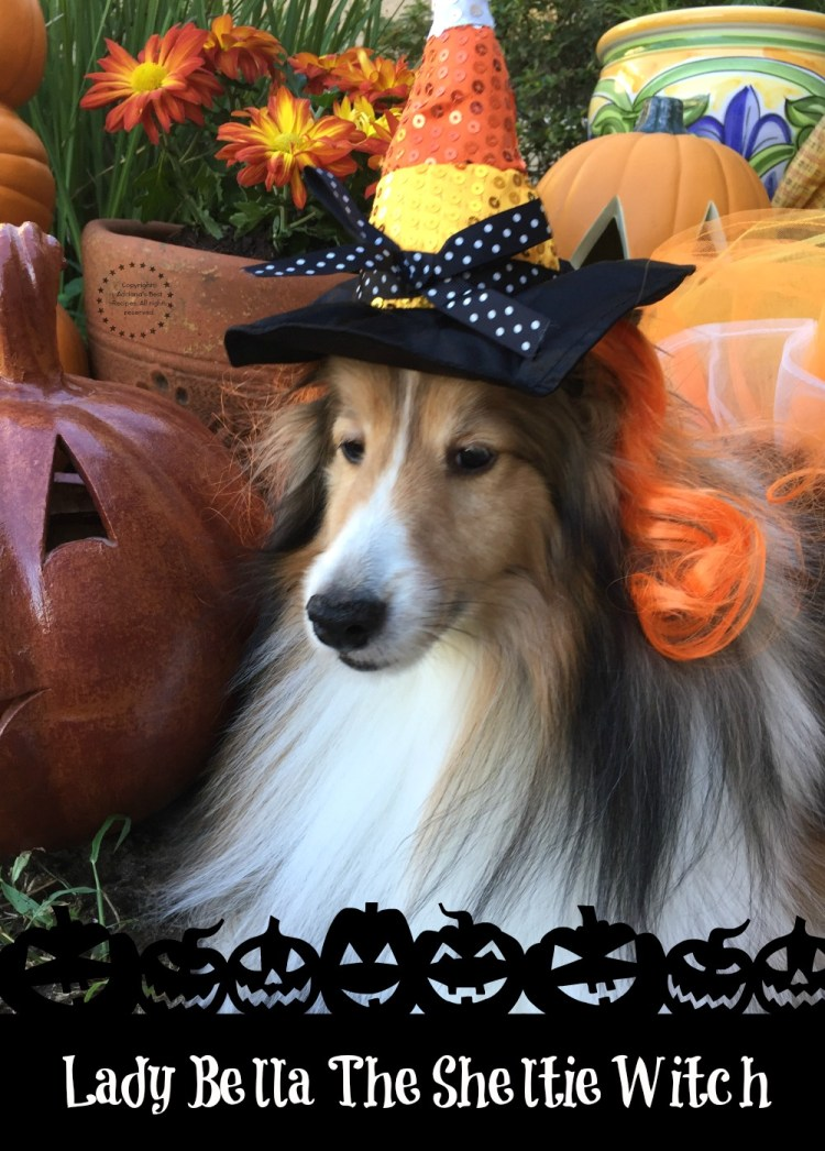 Lady Bella The Sheltie Witch