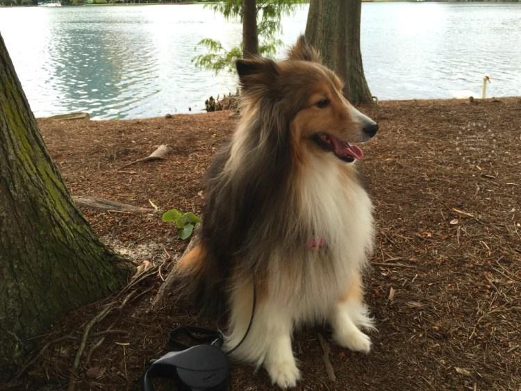 Cuando camines con tu perro usa una correa