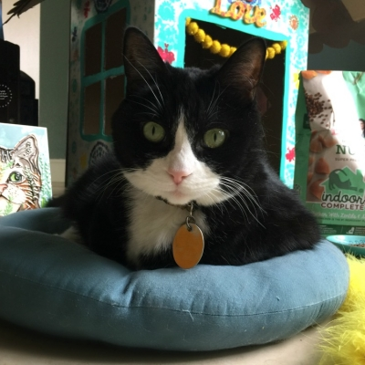 Indoor Cat Playhouse for Pampered Felines