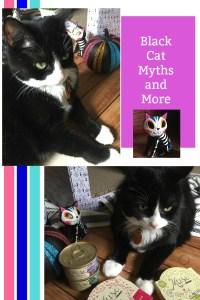 La temporada del otoño es mágica y misteriosa y sin duda una buena oportunidad para acabar con esos mitos sobre los gatos negros
