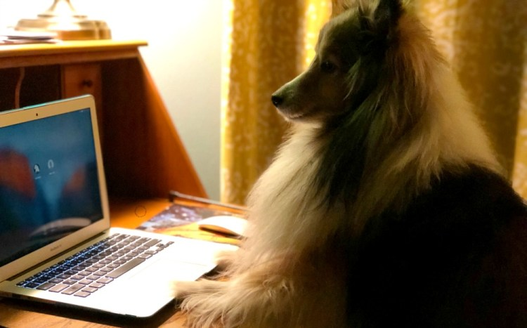 Follow the BlogPaws fun on social media