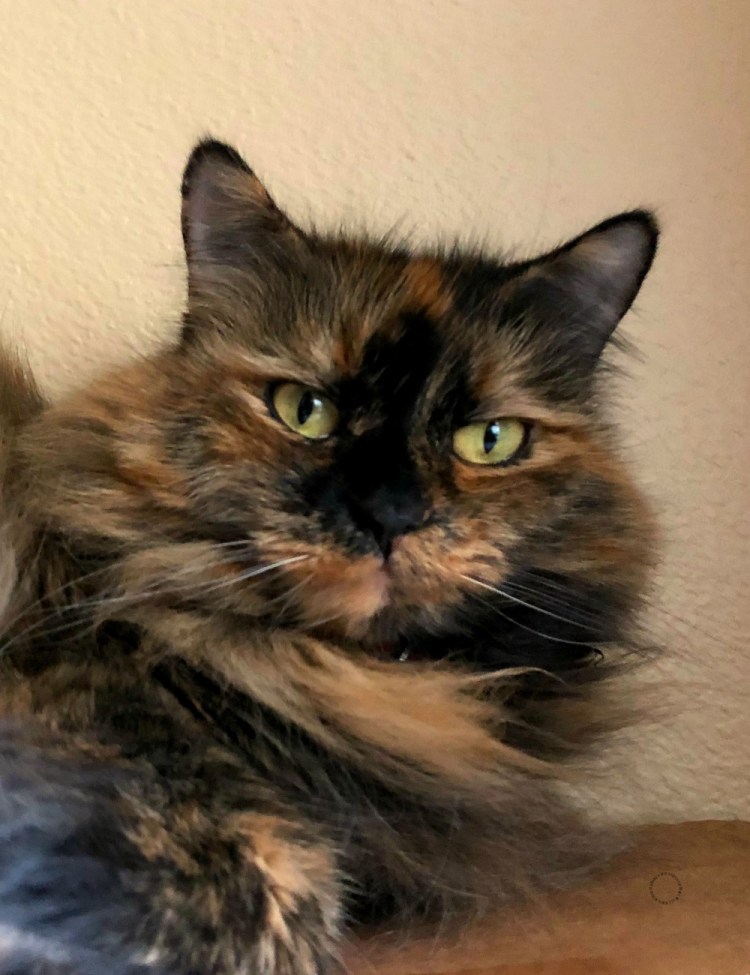 My beloved pets' health is very important learning more at BlogPaws