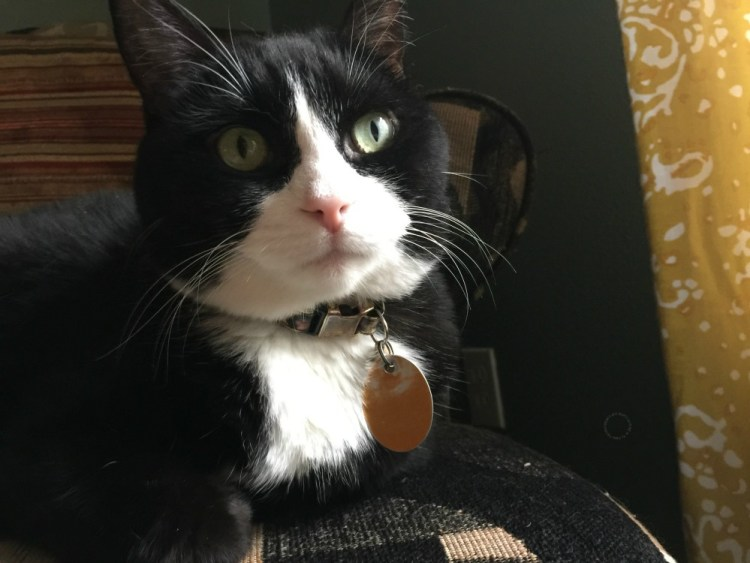 Tatiana loves the camera but want to learn more tricks at BlogPaws