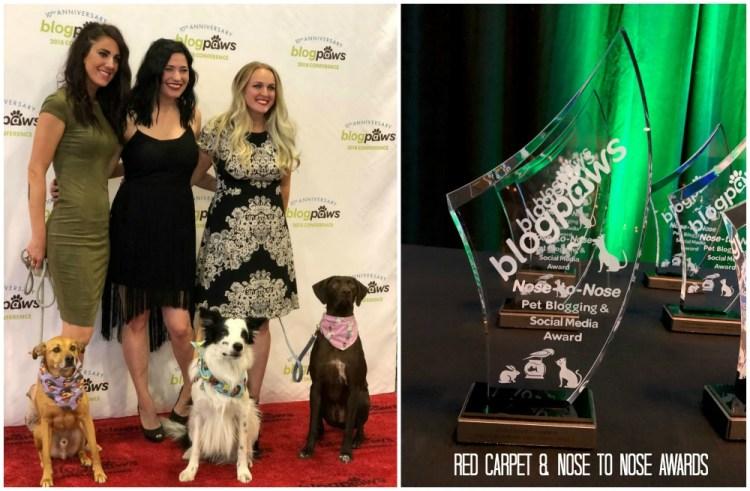 La alfombra roja en BlogPaws y la gala Nose To Nose Awards