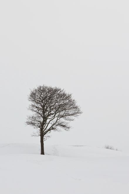 Tree on a snowy hillside
