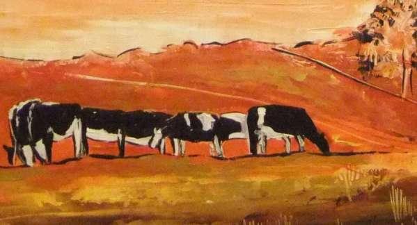 Ballyronan Cows