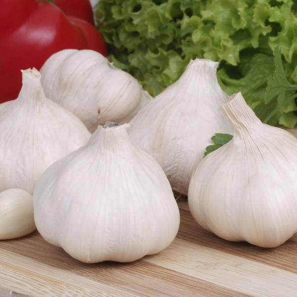 Garlic Suppliers Exporters in India