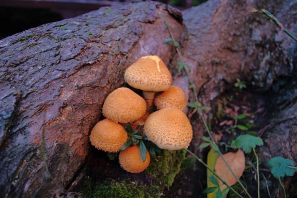 Mushrooms in Baker Lane.