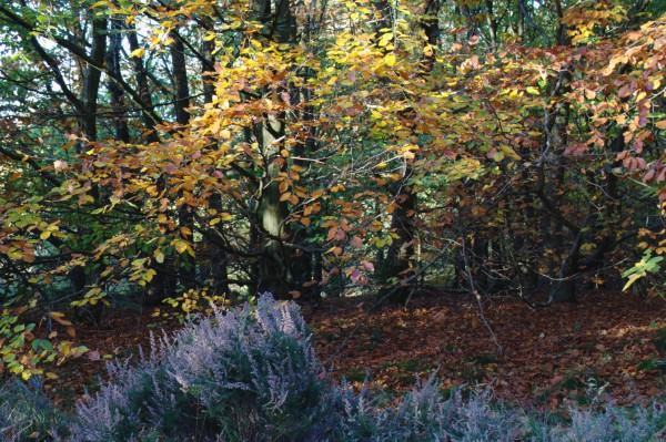 Autumn colours in the late afternoon sunshine.
