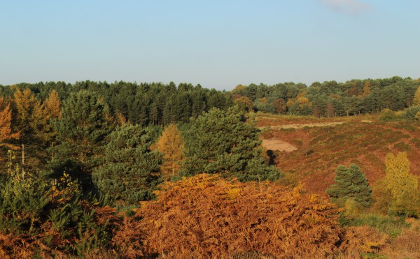 Hednesford Hills in its autumn colours.