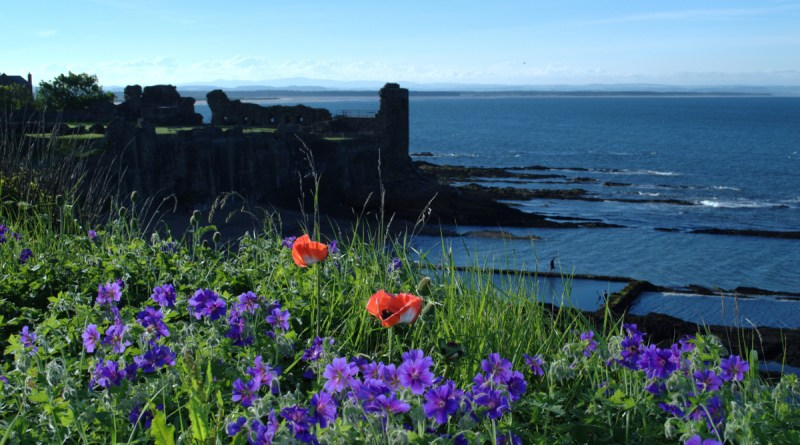 St Andrews Castle set amongst wild flowers and blue sea.