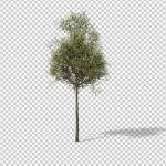 Download preview of tree