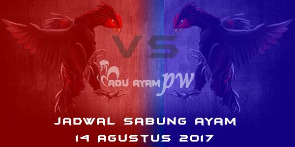 jadwal sabung ayam 14 Agustus 2017