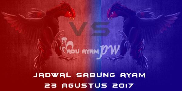 jadwal sabung ayam 23 Agustus 2017