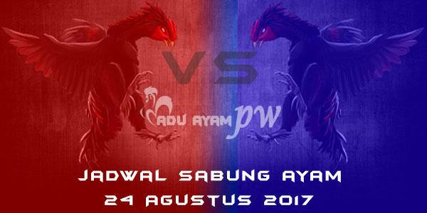 jadwal sabung ayam 24 Agustus 2017