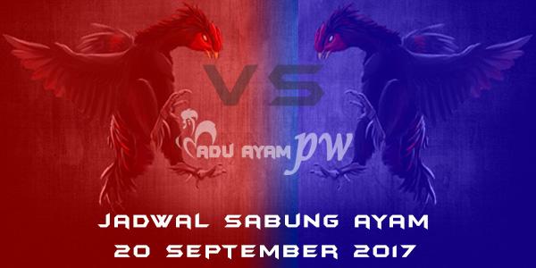 jadwal sabung ayam 20 September 2017