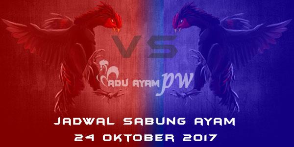 jadwal sabung ayam 24 Oktober 2017
