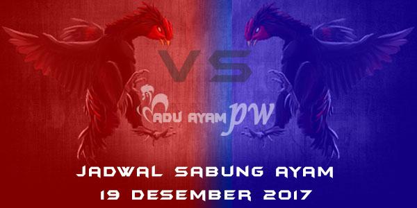 jadwal sabung ayam 19 Desember 2017