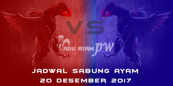 jadwal sabung ayam 20 Desember 2017