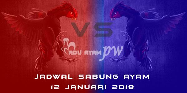 jadwal sabung ayam 12 Januari 2018