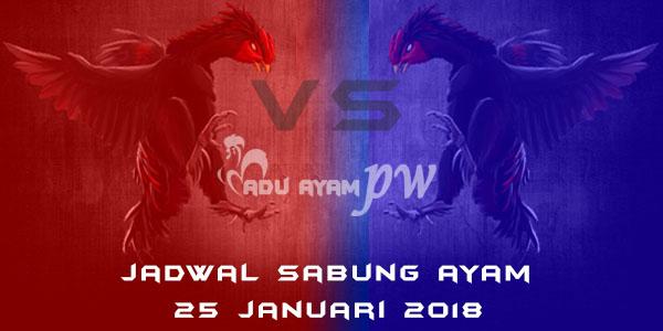 jadwal sabung ayam 25 Januari 2018