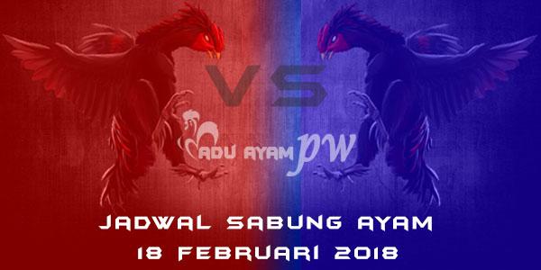 jadwal sabung ayam 18 Februari 2018