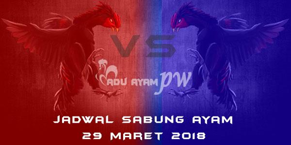 jadwal sabung ayam 29 Maret 2018