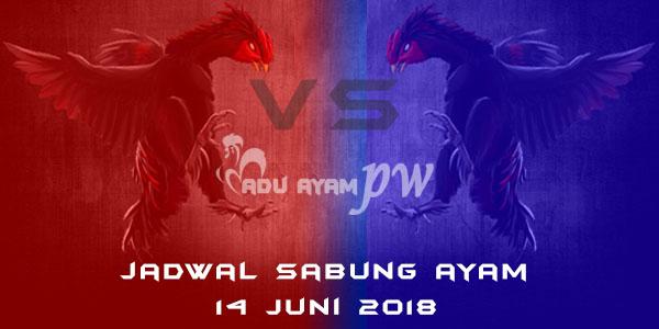 jadwal sabung ayam 14 Juni 2018