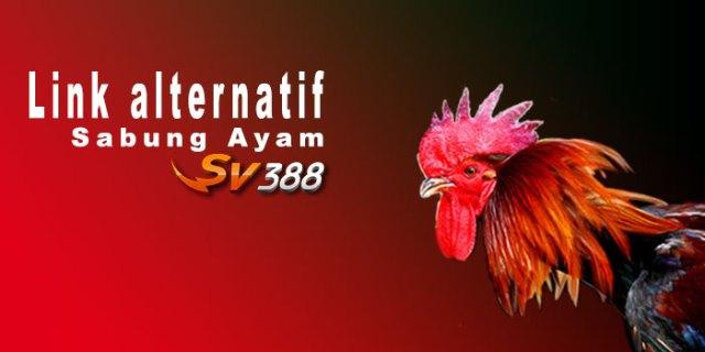 Link Alternatif Sabung Ayam SV388 Terbaru